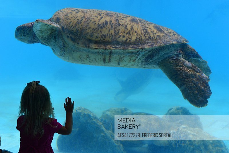 Turtle in Churaumi Aquarium of Okinawa,Japan,Asia.