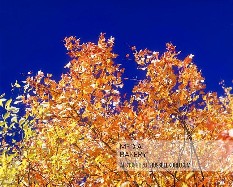 Fall Foliage, Pennsylvania, USA