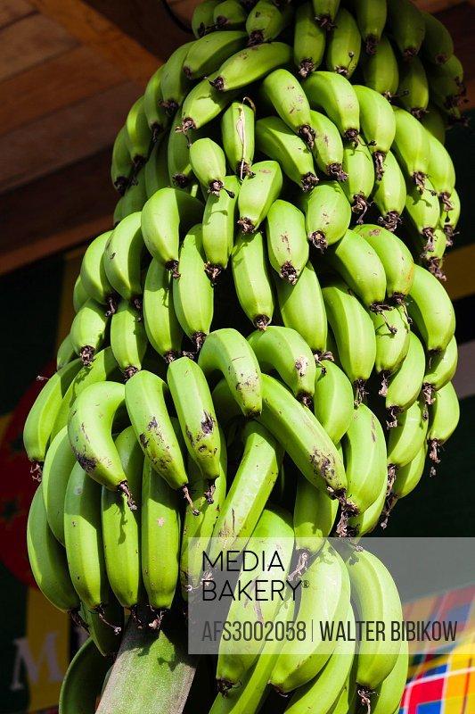 Dominica, Roseau, tropical vegetation, bananas