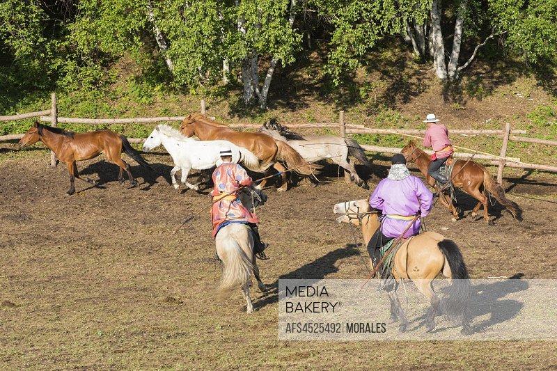 China, Inner Mongolia, Hebei Province, Zhangjiakou, Bashang Grassland, Mongolian working horses in a coral.