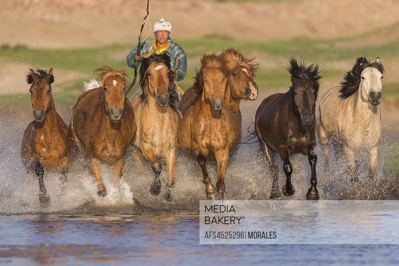 China, Inner Mongolia, Hebei Province, Zhangjiakou, Bashang Grassland, Mongolians traditionnaly dressed with horses running in a group in the water.