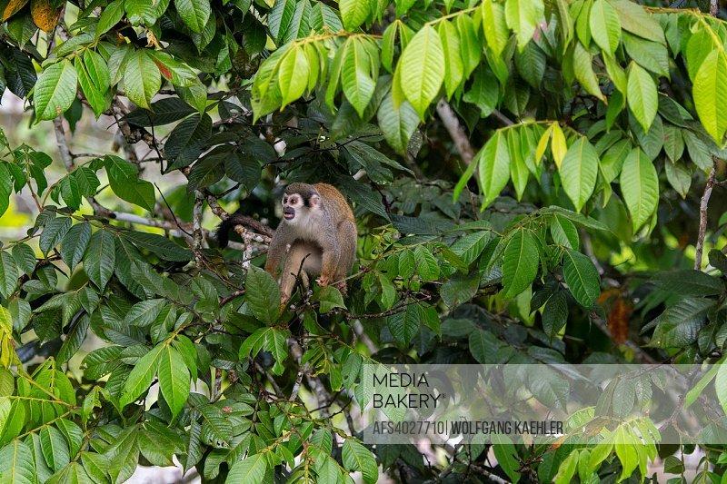 La selva (Forest World)