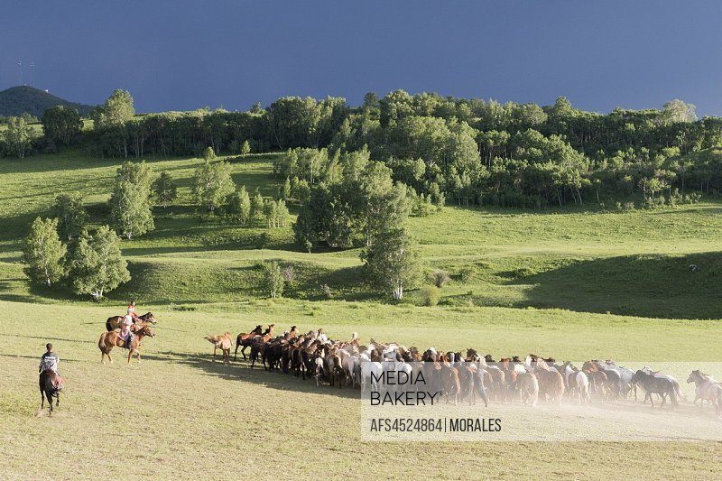 China, Inner Mongolia, Hebei Province, Zhangjiakou, Bashang Grassland, horses running in a group in the meadow.