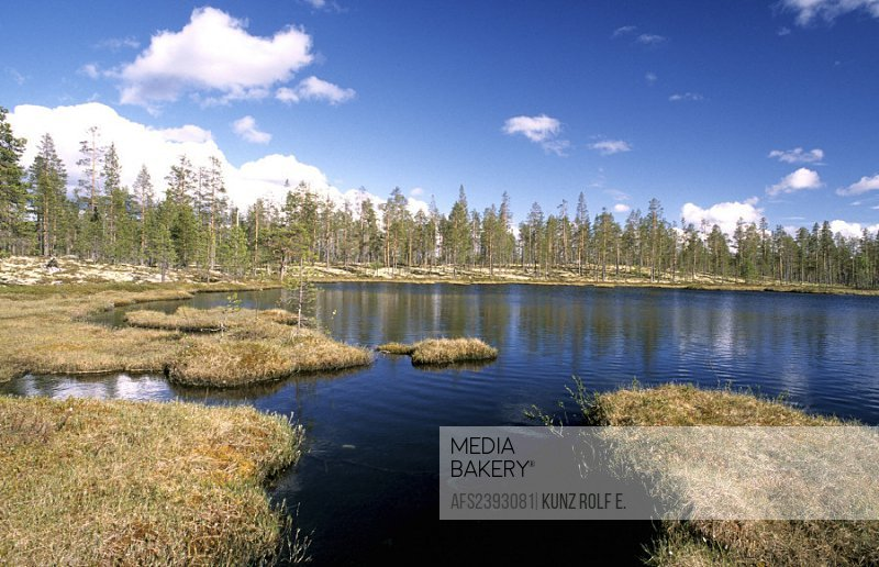 10515801, scenery, moor, moor lake, grass islands, firs, Norway, Europe, Solenstua, province Hedmark,