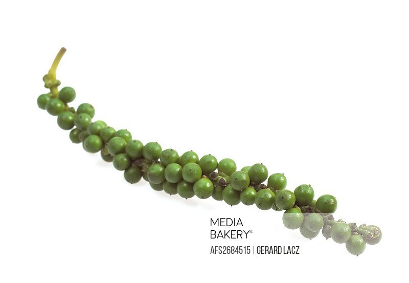 Fresh Green Peppercorn, Piper nigrum, Berries against White Background