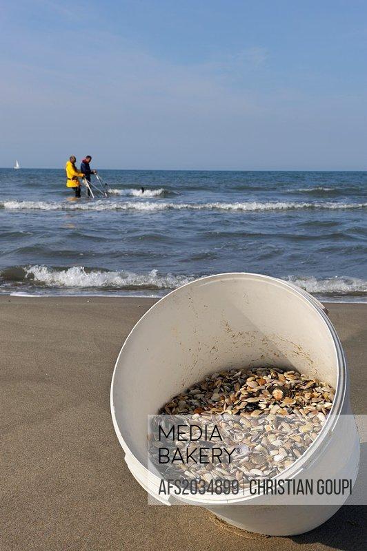 Tellines shell fishermen on the Espiguette beach, Grau du Roi, Gard department, Languedoc-Roussillon region, France, Europe