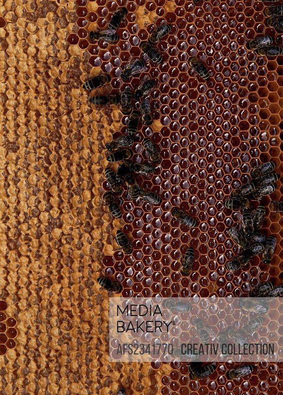 bees sitting on beeswax