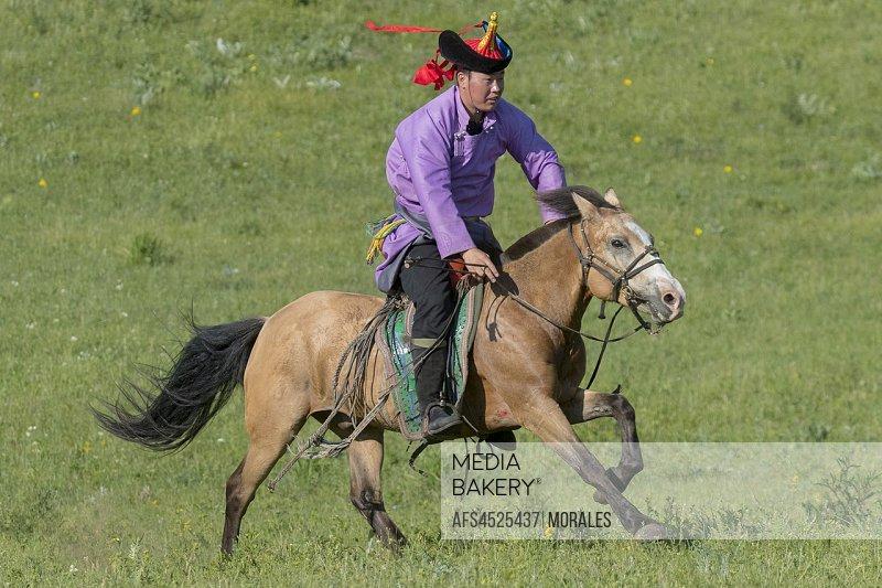 China, Inner Mongolia, Hebei Province, Zhangjiakou, Bashang Grassland, Mongol on a horse, traditional exercise of address.