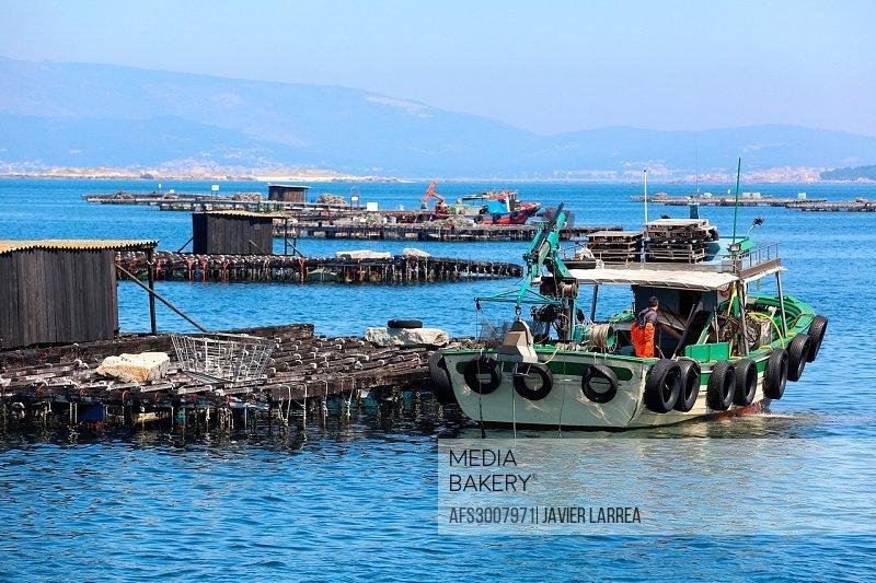 Cultivation of mussels, semi-submerged platform Batea marine cultivation, O´Grove, Ria de Arousa, Pontevedra province, Galicia, Spain.