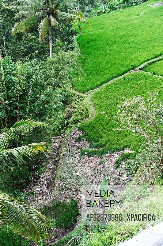 Vegetation destroyed by flooding in Bali, Indonesia