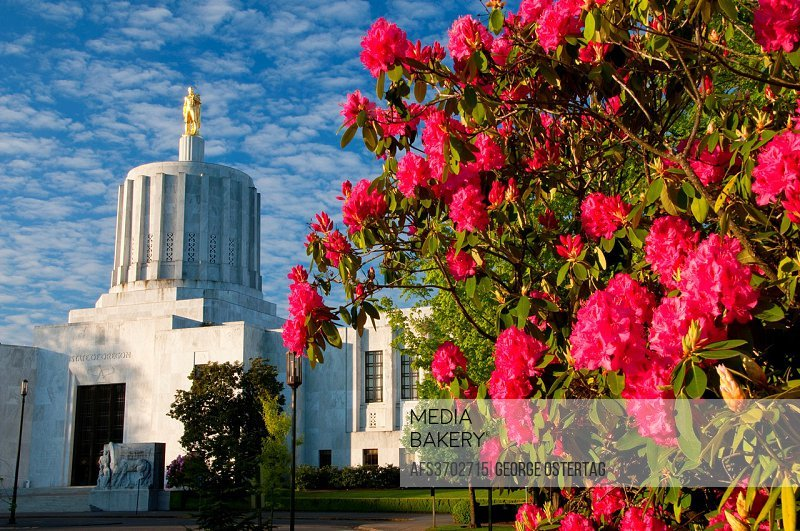 Oregon Capitol with rhododendron, State Capitol State Park, Salem, Oregon.