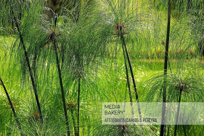 Grass, Mexico