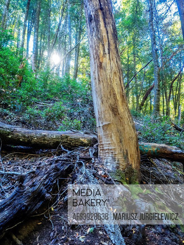 Castle Rock State Park is a state park located along the crest of the Santa Cruz Mountains. It embraces coast redwood, Douglas fir, and madrone forest...