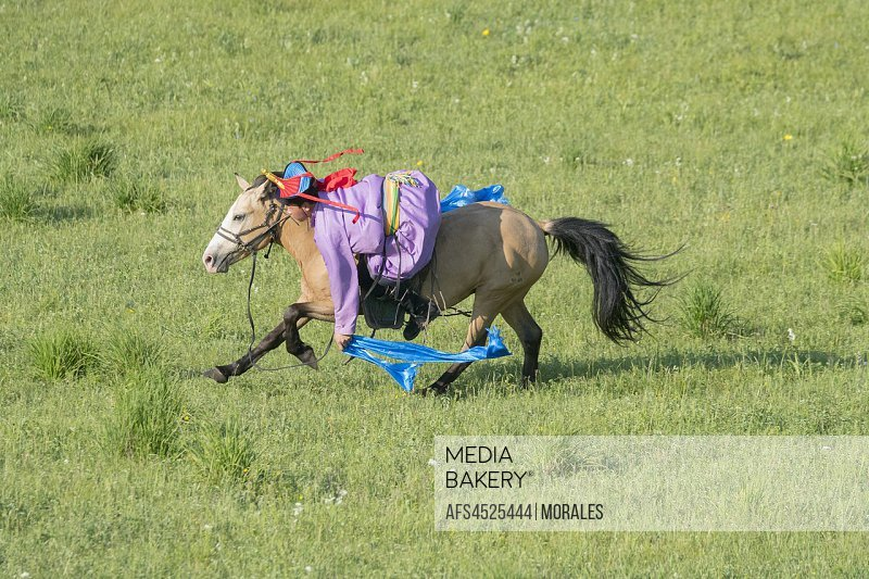 China, Inner Mongolia, Hebei Province, Zhangjiakou, Bashang Grassland, Mongol man traditionnaly dressed on a horse, traditional exercise of address