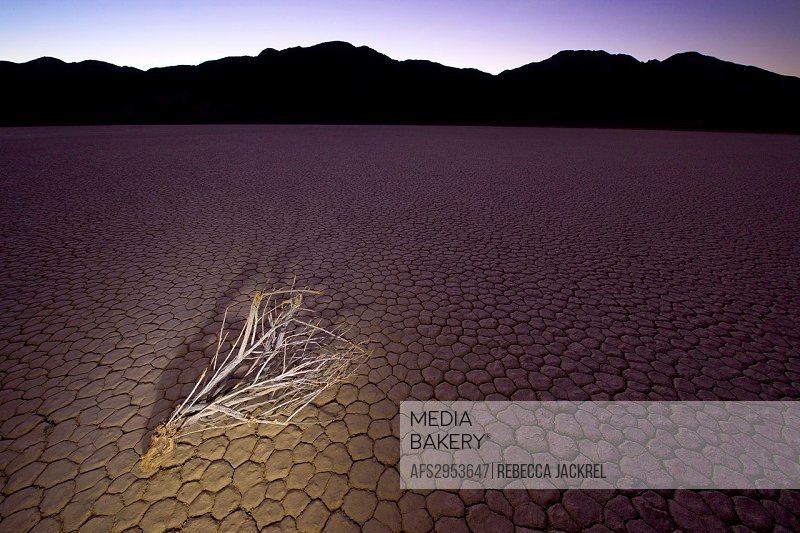 A single branch resting on the Racetrack Playa in Death Valley National Park.