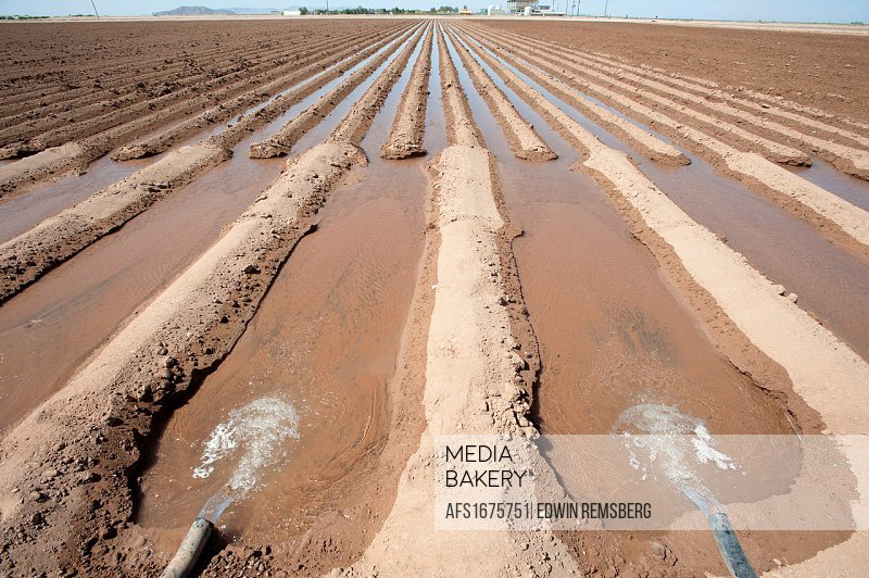 Channel irrigation of farm fields in Maricopa Arizona USA.
