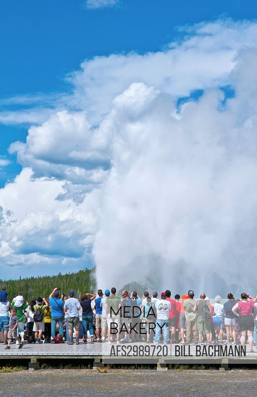 Famous Old Faithful geyer in Yellowstone National Park in Wyoming rising