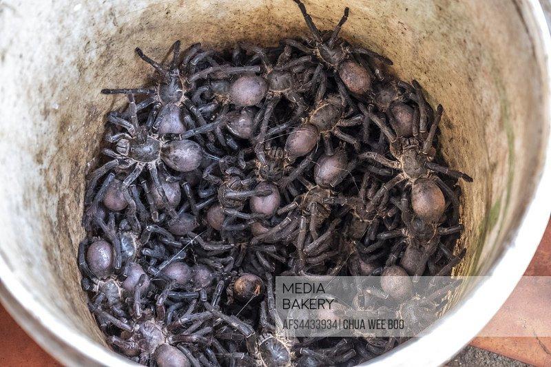Cambodia, Woman selling live tarantula spiders