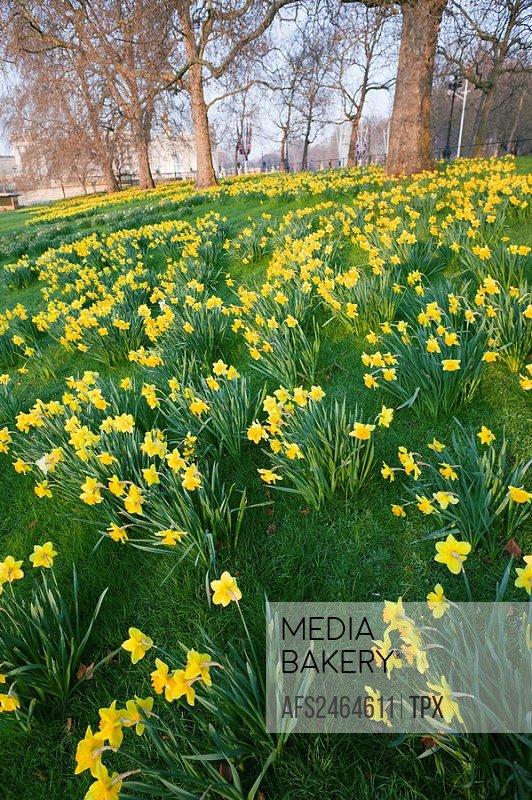 Mediabakery photo by age fotostock uk united kingdom great uk united kingdom great britain britain england london st james mightylinksfo