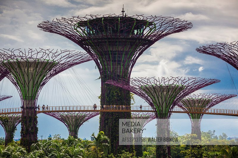 Singapore, Gardens By The Bay, Super Tree Grove, daytime.