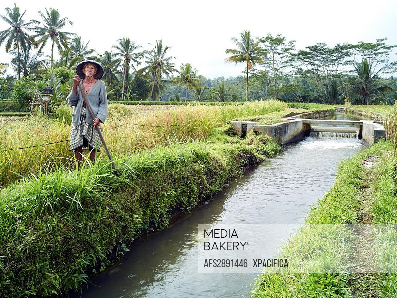 A farmer poses in the rice paddies of Tampaksiring