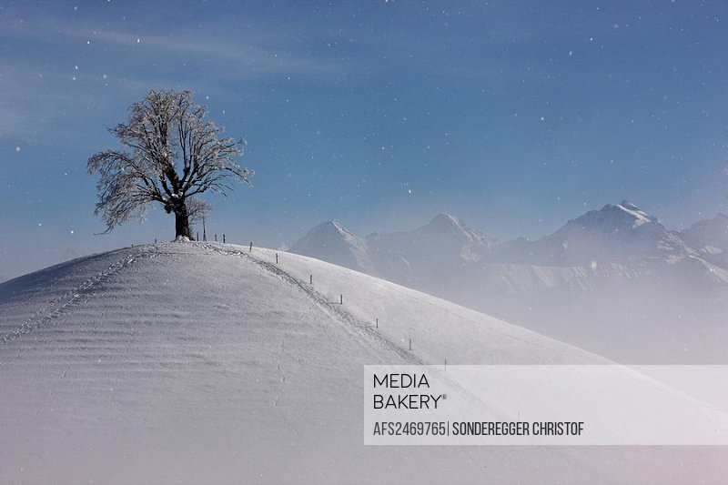 Switzerland, scenery, winter, snow, winter scenery, hill, tree, Burgistein, Alps, Eiger, monk, Jungfrau, fog, sea of fog, mountains, canton Bern, Bern...