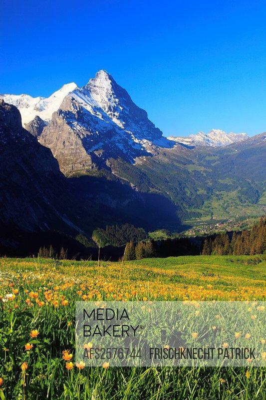 Alp, alps, flora, view, mountain, mountain panorama, mountains, mountain flora, mountain spring, mountain massif, mountain panorama, mountain wall, Be...