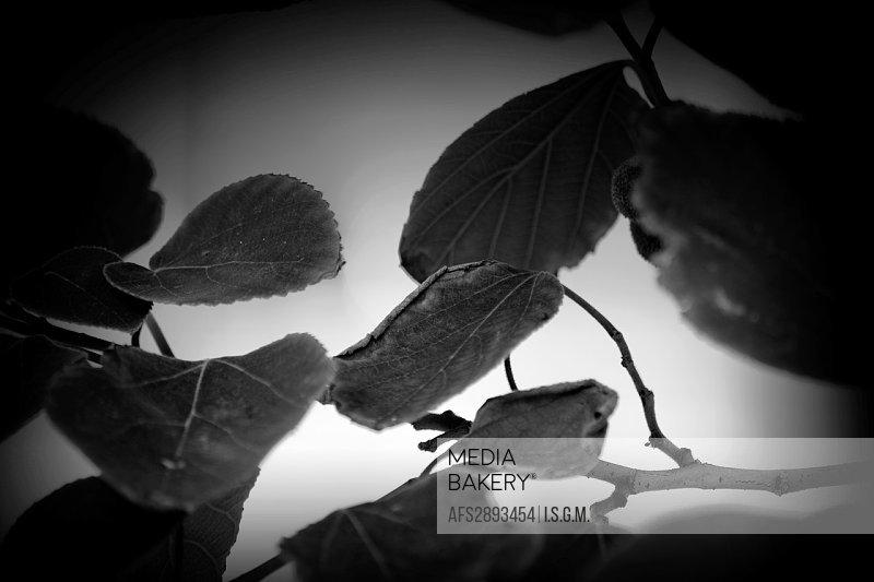 Vegetation in black and white
