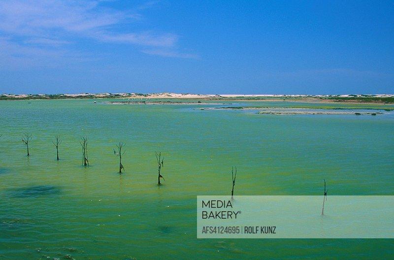 Küste, Lagune, Mangroven, Anpflanzung, Wüste, Sand, Khwar Dirif, Oman