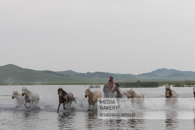 China, Inner Mongolia, Hebei Province, Zhangjiakou, Bashang Grassland, horses, a group in the water.