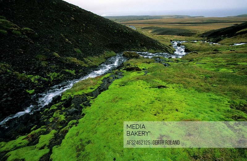 Arnastapi, Iceland, brook, creek, moss, moss carpe