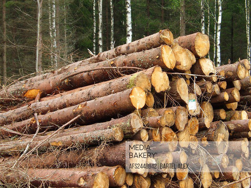 Logs, wood, forest, Paper Making, Sweden, Europe, fir trees, inudstry, factory