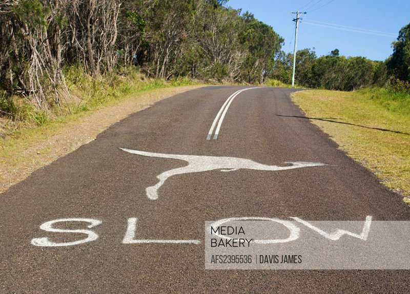 Australia, mark, tip, warning, kangaroo, attention, slowly, slow, street, traffic, animals, prevention