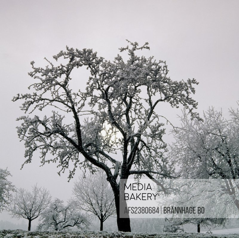 10276461, trees, fogs, hoarfrost, sundown, mood, winter,