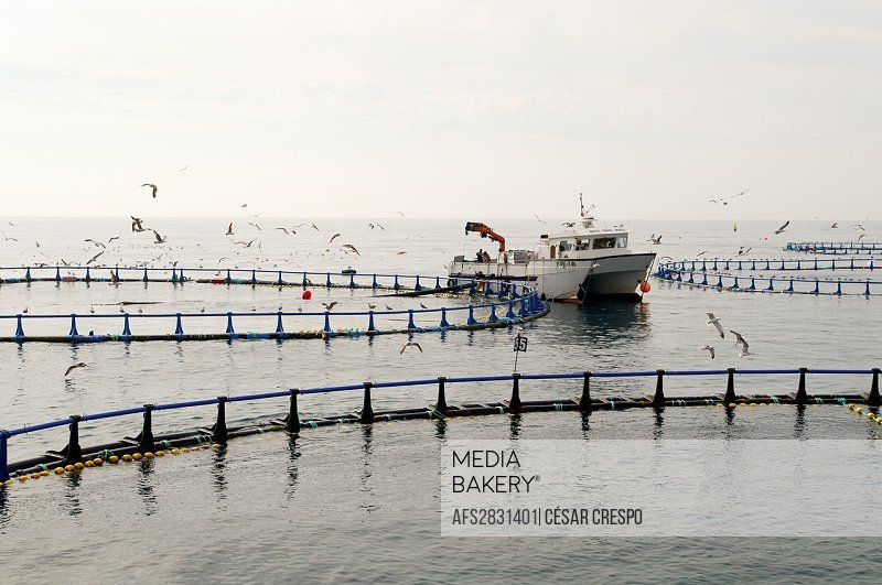 -Tuna Quail Farm- Industries & Economy, Spain