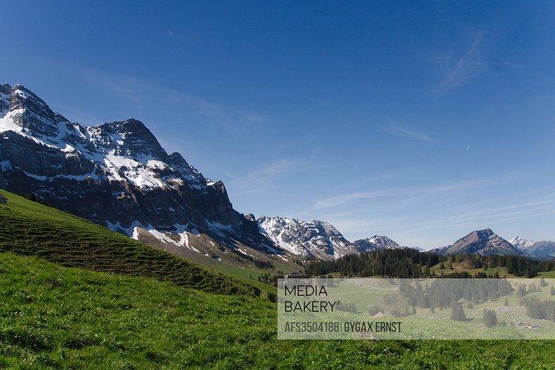 Switzerland, Europe, Appenzell, Alpstein, Schwägalp, Podersalp, alp, spring, fir tree, Schwägalp