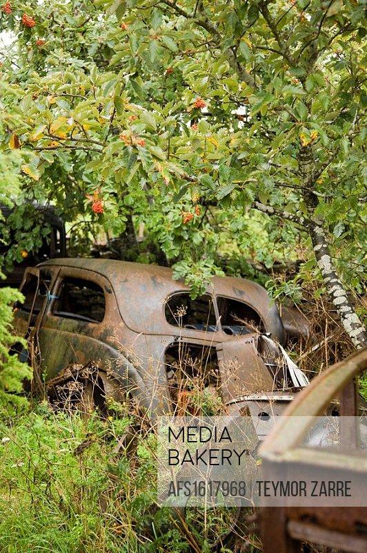 Cars, nostalgia, installation, 50 speeches cars, rust, romance,