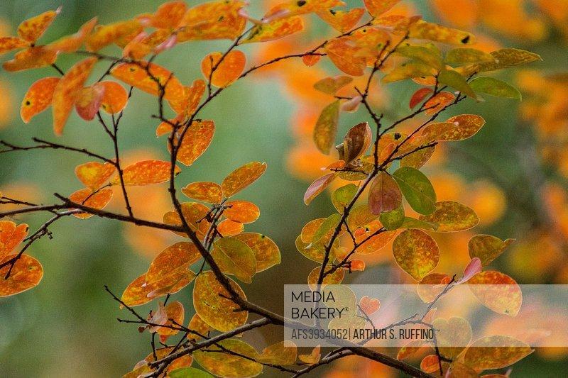 Autumn fantasy. The colors of fall.