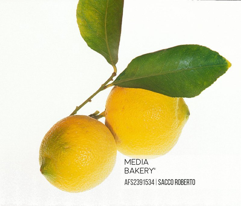 lemon, fruit, food, studio