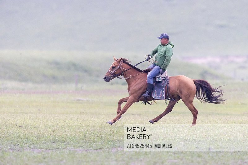 China, Inner Mongolia, Hebei Province, Zhangjiakou, Bashang Grassland, Mongol man traditionnaly dressed on a horse, traditional exercise of address, .