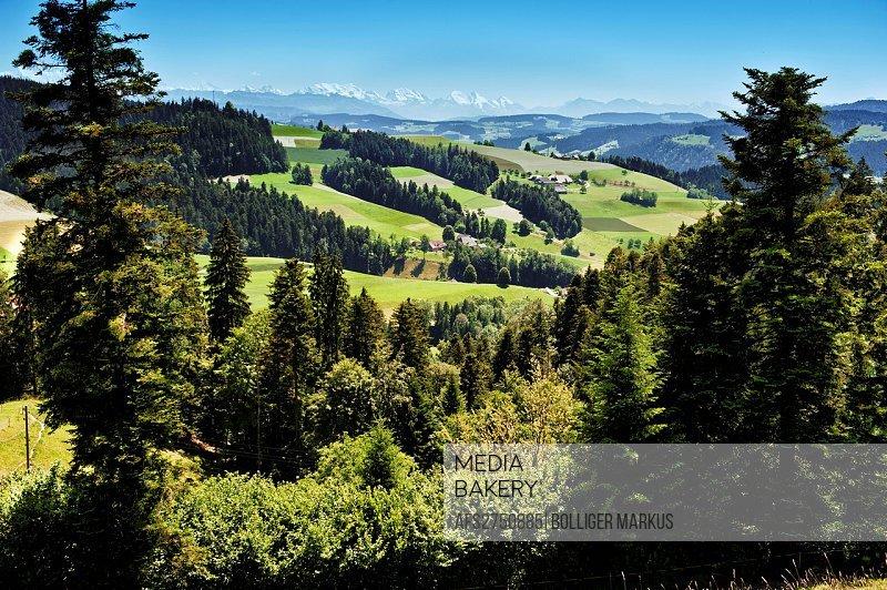 Switzerland, canton Bern, Emmental, Voralpen, wood, forest, fir forest, mountain forest, landscape, hilly landscape, scenery, trees, Kulturlandschaft,...
