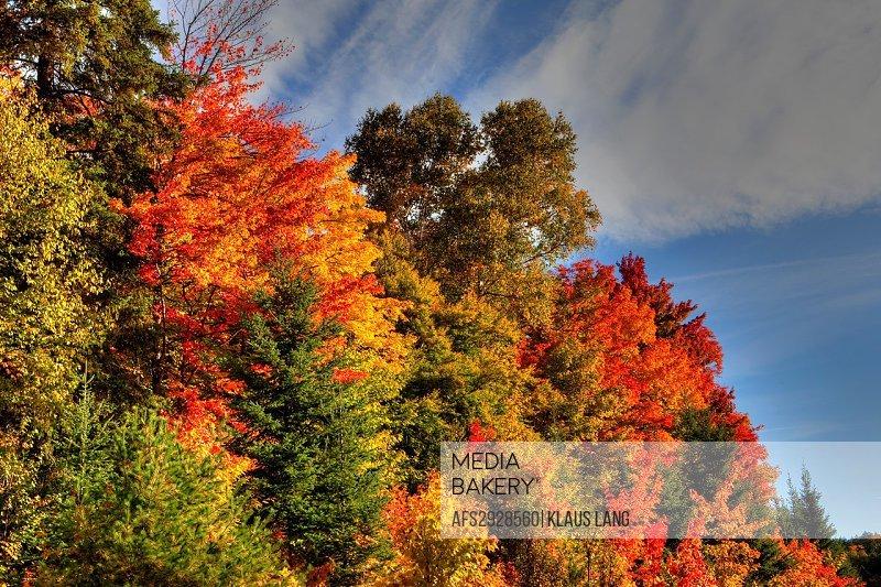 Autumn Colours in Algonquin Provincial Park, Ontario, Canada