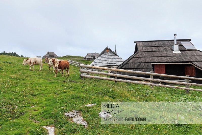 Velika Planina and mountain cottage hut or house.