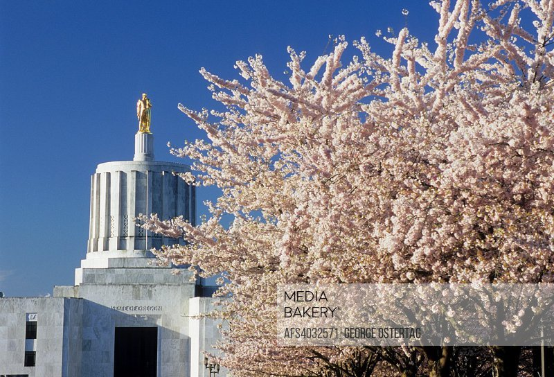 State capitol with cherry trees in bloom, State Capitol State Park, Salem, Oregon.
