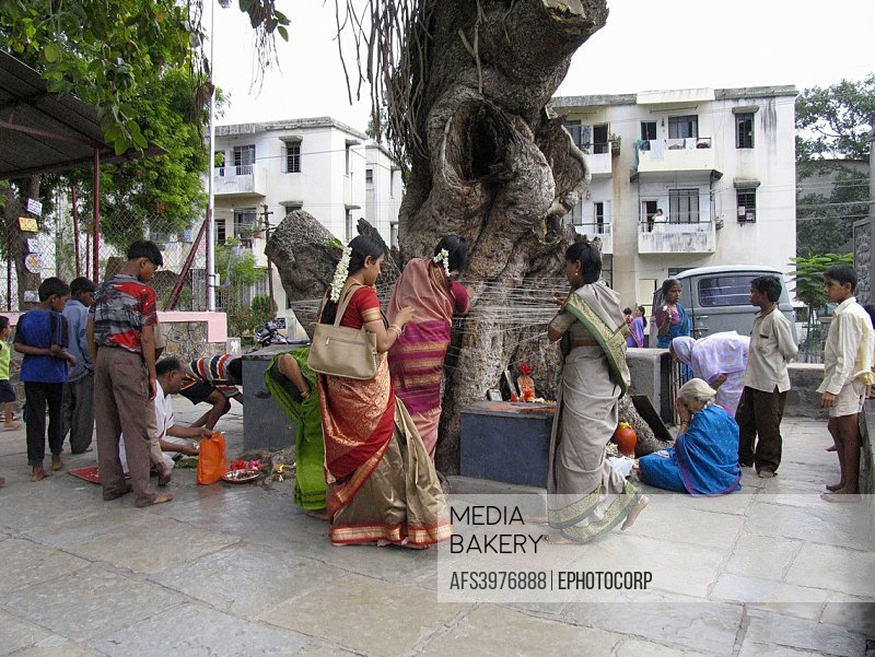Indian Festival - Vat Savitri or Wat Purnima: Women pray for the prosperity and longevity of their husbands by tying threads around a banyan tree