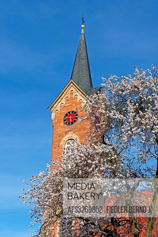 Europe, Germany, Rhineland-Palatinate, Haardt, Mandelring, K 5, Haardt church, steeple, architecture, trees, buildings, constructions, church, place o...