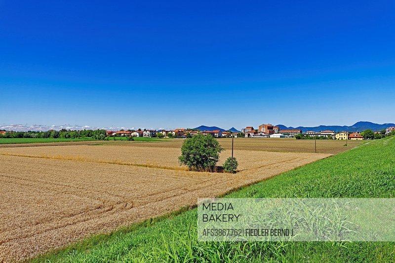Grain field, town