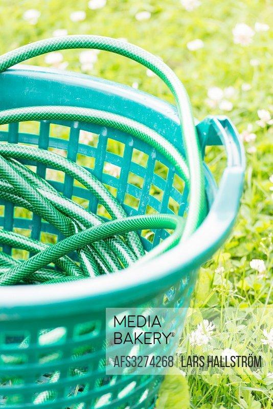 Close up of garden hose on green grass.