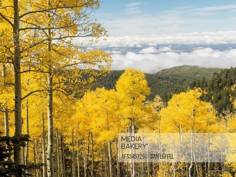 Mountain Fall Foliage.