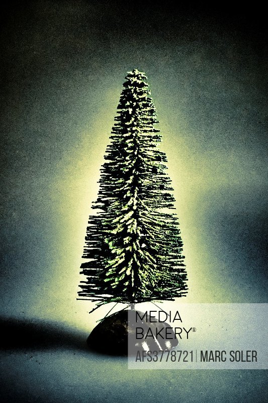 Tree, fir tree, concept.
